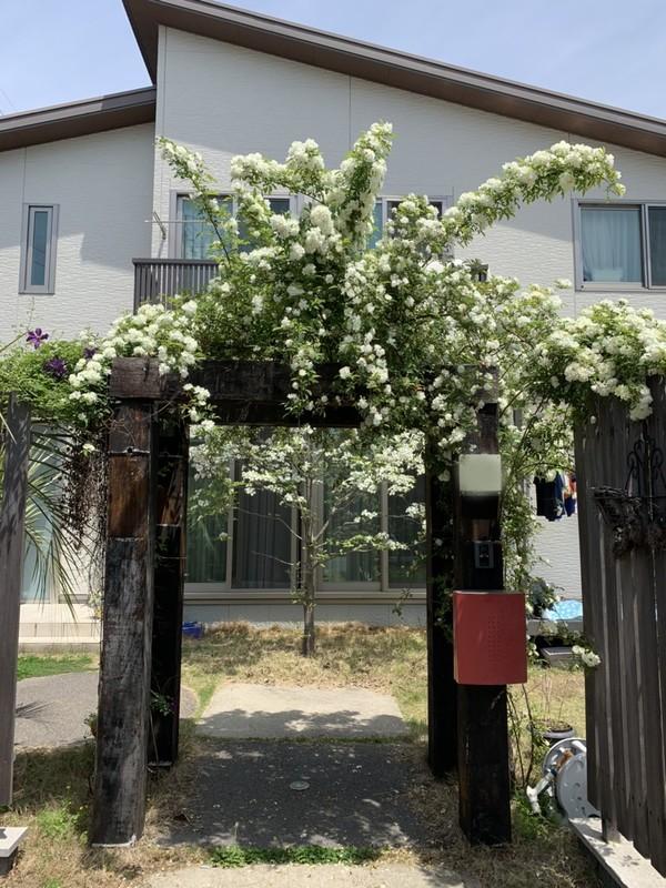 成長した庭のサムネイル