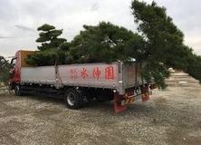 植木の出荷