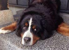 水伸園の看板犬